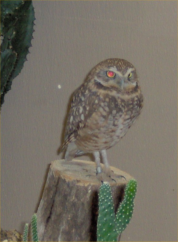 Robyn 39 s birds of prey page for Do owls eat fish